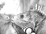fany.over-blog.de krokodile echsen (17).jpg
