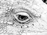 fany.over-blog.de krokodile echsen (21).jpg