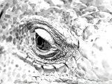 fany.over-blog.de krokodile echsen (22).jpg
