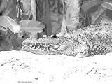 fany.over-blog.de krokodile echsen (1).jpg