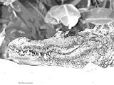 fany.over-blog.de krokodile echsen (3).jpg