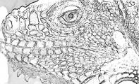 fany.over-blog.de krokodile echsen (6).jpg