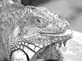 fany.over-blog.de krokodile echsen (10).jpg