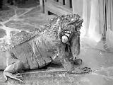 fany.over-blog.de krokodile echsen (11).jpg
