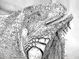 fany.over-blog.de krokodile echsen (12).jpg