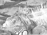 fany.over-blog.de krokodile echsen (15).jpg