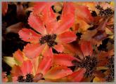 0024-fetthenne-farb.jpg