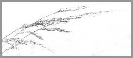 0031-gras-1v.jpg