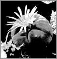 0078-kaktus-10.jpg