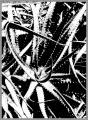 0081-kaktus-13.jpg
