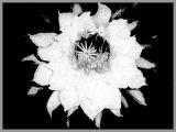 0086-kaktus-3.jpg