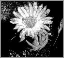 0087-kaktus-4.jpg