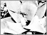 0088-kaktus-5.jpg