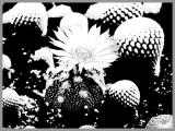 0089-kaktus-6.jpg