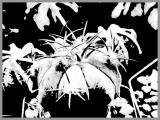 0090-kaktus-7.jpg