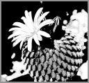 0091-kaktus-8.jpg