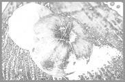 0151-k-rbis--44-.jpg