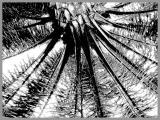 0063-palme-1-strich.jpg