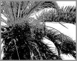0073-palme-6-strich.jpg