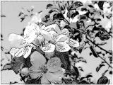 tulpen u (5).jpg