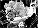 tulpen u (6).jpg