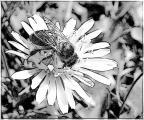 tulpen u (11).jpg