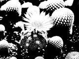 0056-kaktus-6.jpg
