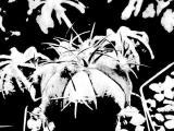 0057-kaktus-7.jpg