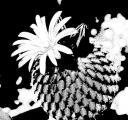 0058-kaktus-8.jpg