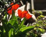 0029-fruehlingsblumen--14-.jpg