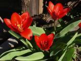 0035-fruehlingsblumen--2-.jpg
