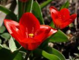 0046-fruehlingsblumen--5-.jpg