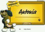 antonia-schild