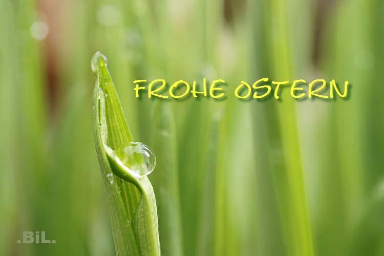 grün, Tropfen, Ostergrüße, zart, durchsichtig, Perle