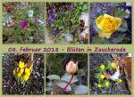 Februarblüten