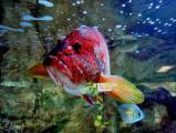 Aquarium HansH Bea.jpg
