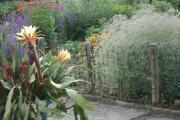 Kaktus schleierkraut.jpg