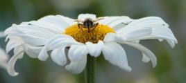 Biene Mahlzeit.jpg