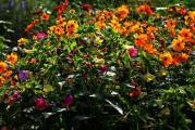 Blumen am 16.8. morgens.jpg