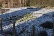 Garten angezuckert 25.1.12.jpg