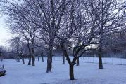 weig Schnee am 14.1..jpg