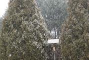 1 1 Schneegest.15.2 14.Uhr..jpg