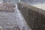 3 Schneeschauer 15.2.12.jpg