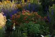 Garten abends 26.6..jpg