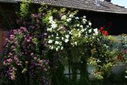 el Rosen am Haus2.jpg