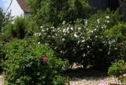 el rosen5.jpg