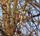 1 ganz im Baum versteckt.jpg
