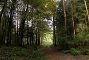 Wald bei t.jpg