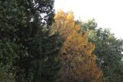 Waldrand Herbst.jpg