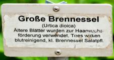 BrennesselIMG_6560.jpg